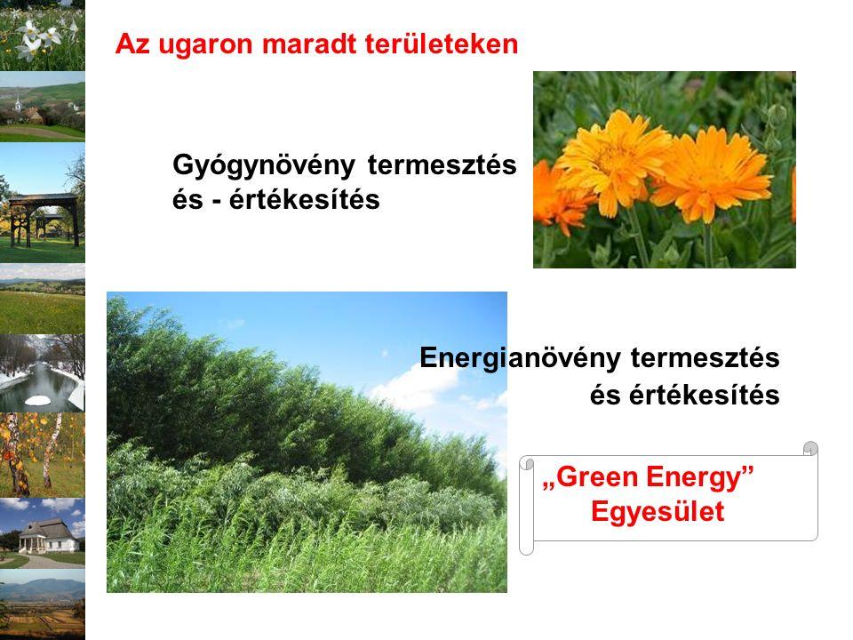 """Gyógynövény termesztés és - értékesítés Az ugaron maradt területeken Energianövény termesztés és értékesítés """"Green Energy"""" Egyesület"""