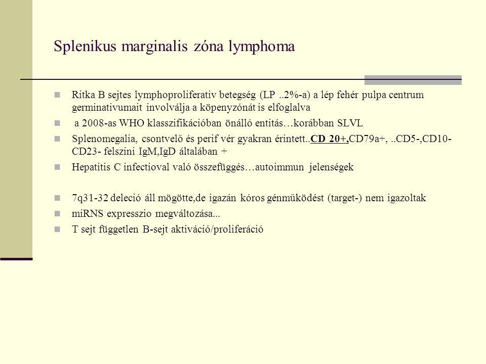 Splenikus marginalis zóna lymphoma Ritka B sejtes lymphoproliferativ betegség (LP..2%-a) a lép fehér pulpa centrum germinativumait involválja a köpenyzónát is elfoglalva a 2008-as WHO klasszifikációban önálló entitás…korábban SLVL Splenomegalia, csontvelő és perif vér gyakran érintett..CD 20+,CD79a+,..CD5-,CD10- CD23- felszini IgM,IgD általában + Hepatitis C infectioval való összefüggés…autoimmun jelenségek 7q31-32 deleció áll mögötte,de igazán kóros génműködést (target-) nem igazoltak miRNS expresszio megváltozása...