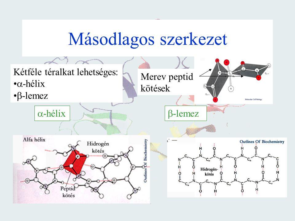 Fehérjék szerkezete Elsődleges szerkezet: Aminosavak kapcsolódási sorrendje Másodlagos szerkezet: A polipeptid lánc konformációja Harmadlagos szerkeze