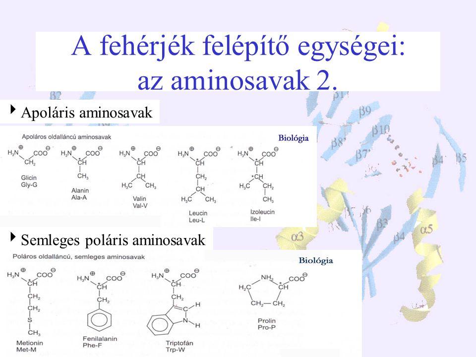 A fehérjék felépítő egységei: az aminosavak 1. A fehérjéket 20 féle aminosav építi fel, mind L sztereoizomer Általános felépítésük:  -aminosavak Iker