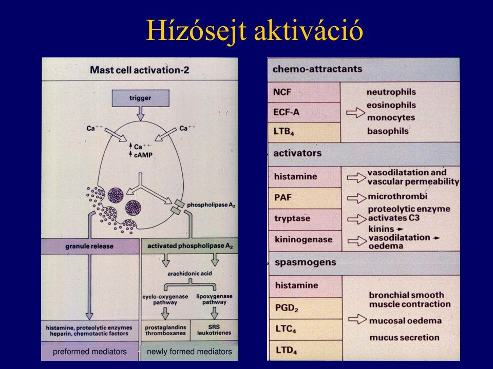 Hízósejt aktiváció