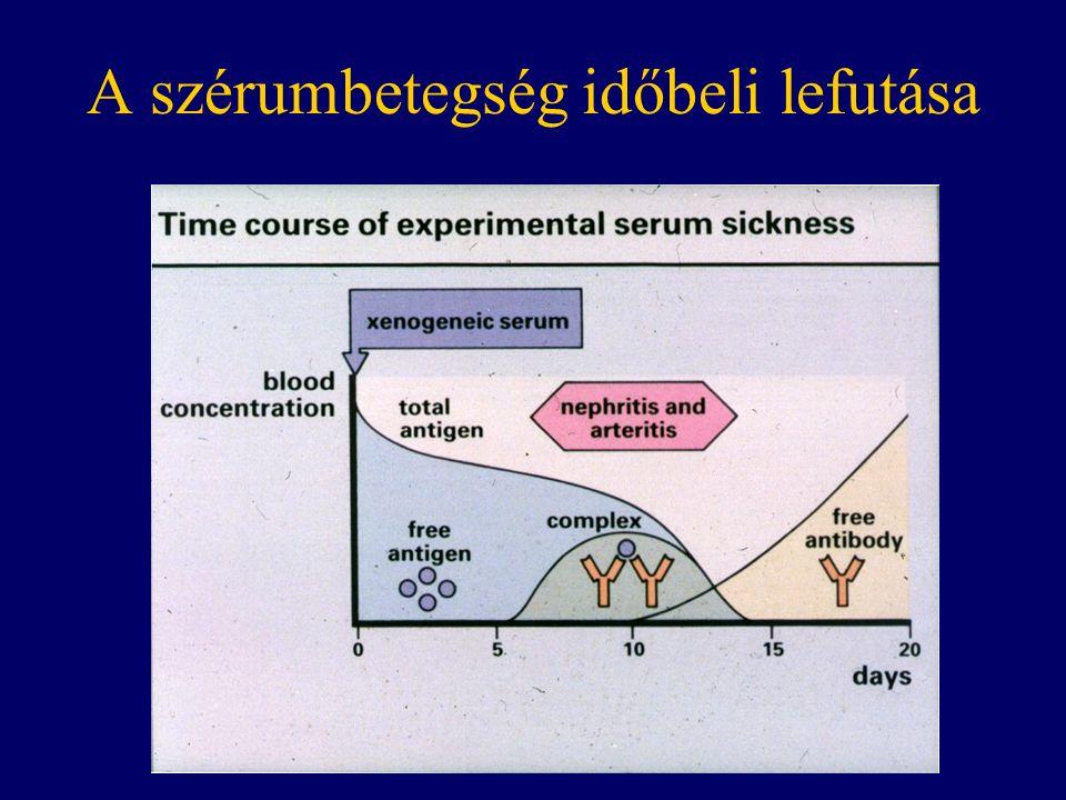 A szérumbetegség időbeli lefutása
