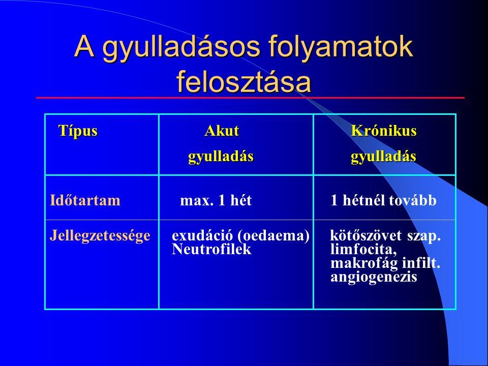 A gyulladásos folyamatok felosztása TípusAkut Krónikus gyulladásgyulladás gyulladásgyulladás Időtartam max.