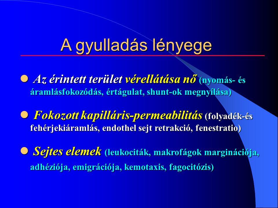 A gyulladás lényege Az érintett terület vérellátása nő (nyomás- és áramlásfokozódás, értágulat, shunt-ok megnyílása) Az érintett terület vérellátása nő (nyomás- és áramlásfokozódás, értágulat, shunt-ok megnyílása) Fokozott kapilláris-permeabilitás (folyadék-és fehérjekiáramlás, endothel sejt retrakció, fenestratio) Fokozott kapilláris-permeabilitás (folyadék-és fehérjekiáramlás, endothel sejt retrakció, fenestratio) Sejtes elemek (leukociták, makrofágok marginációja, adhéziója, emigrációja, kemotaxis, fagocitózis) Sejtes elemek (leukociták, makrofágok marginációja, adhéziója, emigrációja, kemotaxis, fagocitózis)