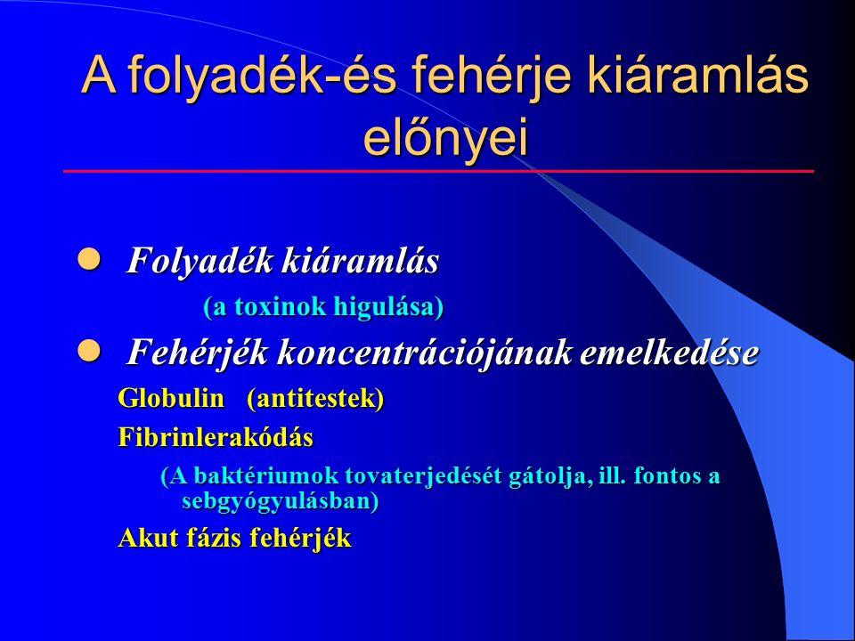 A folyadék-és fehérje kiáramlás előnyei Folyadék kiáramlás Folyadék kiáramlás (a toxinok higulása) Fehérjék koncentrációjának emelkedése Fehérjék koncentrációjának emelkedése Globulin (antitestek) Fibrinlerakódás (A baktériumok tovaterjedését gátolja, ill.