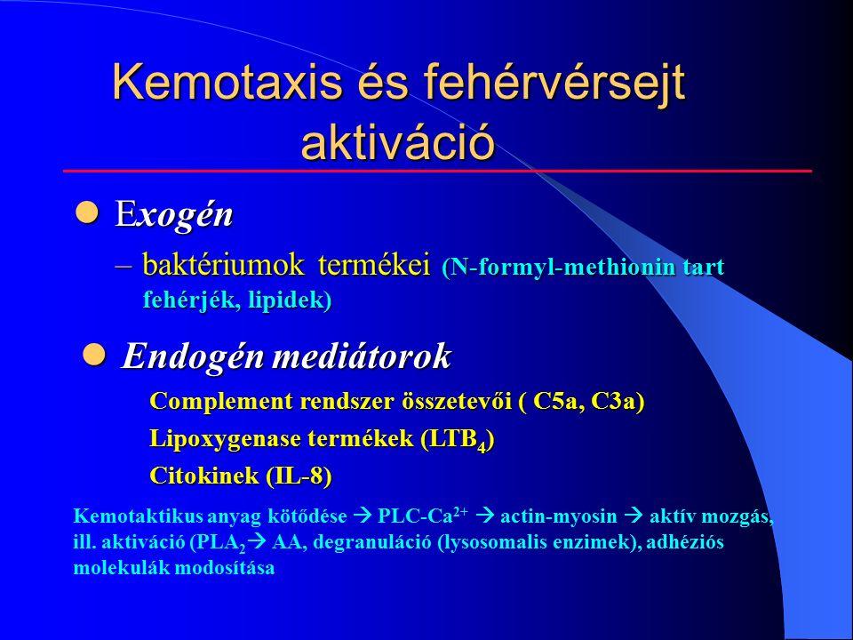 Kemotaxis és fehérvérsejt aktiváció Exogén Exogén –baktériumok termékei (N-formyl-methionin tart fehérjék, lipidek) Endogén mediátorok Endogén mediátorok Complement rendszer összetevői ( C5a, C3a) Complement rendszer összetevői ( C5a, C3a) Lipoxygenase termékek (LTB 4 ) Lipoxygenase termékek (LTB 4 ) Citokinek (IL-8) Citokinek (IL-8) Kemotaktikus anyag kötődése  PLC-Ca 2+  actin-myosin  aktív mozgás, ill.