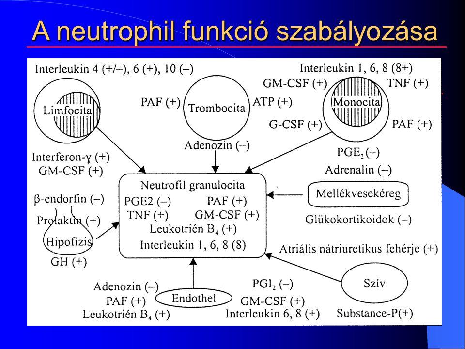 A neutrophil funkció szabályozása