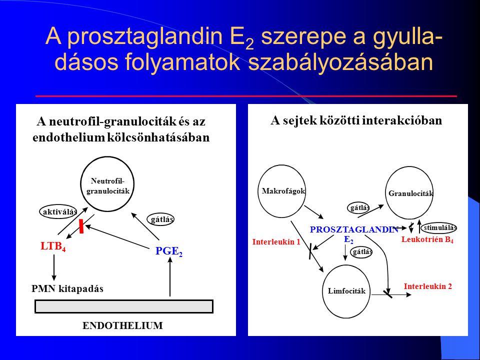 ENDOTHELIUM PMN kitapadás PGE 2 LTB 4 gátlás aktiválás A neutrofil-granulociták és az endothelium kölcsönhatásában Neutrofil- granulociták Makrofágok Granulociták Limfociták PROSZTAGLANDIN E2E2 Interleukin 2 Interleukin 1 Leukotrién B 4 gátlás stimulálás A sejtek közötti interakcióban A prosztaglandin E 2 szerepe a gyulla- dásos folyamatok szabályozásában