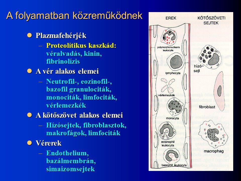 Plazmafehérjék Plazmafehérjék –Proteolítikus kaszkád: véralvadás, kinin, fibrinolízis A vér alakos elemei A vér alakos elemei –Neutrofil-, eozinofil-, bazofil granulociták, monociták, limfociták, vérlemezkék A kötőszövet alakos elemei A kötőszövet alakos elemei –Hízósejtek, fibroblasztok, makrofágok, limfociták Vérerek Vérerek –Endothelium, bazálmembrán, simaizomsejtek A folyamatban közreműködnek