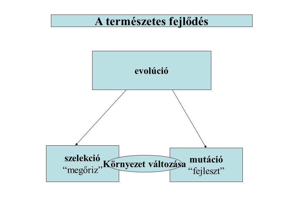 """evolúció szelekció """"megőriz"""" mutáció """"fejleszt"""" A természetes fejlődés Környezet változása"""