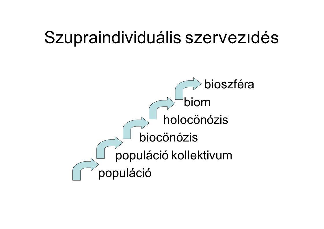 Szupraindividuális szervezıdés bioszféra biom holocönózis biocönózis populáció kollektivum populáció