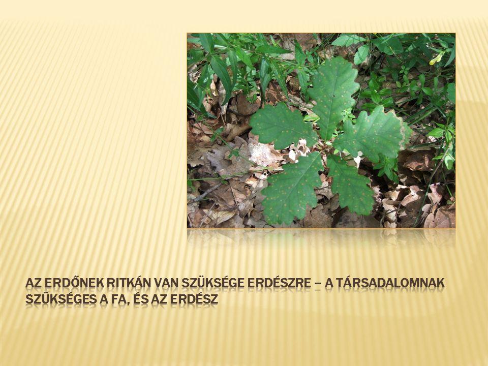  Erdőrezervátumok:  Nincs faanyag felhasználás az ember részére  Természetes folyamatok  Nem kell emberi tényezőerdész sem.