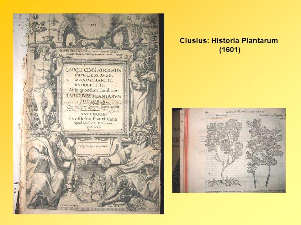 Clusius: Historia Plantarum (1601)