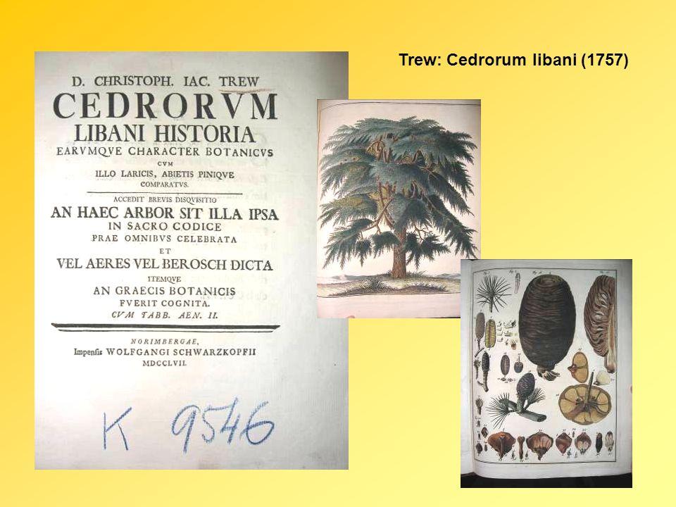 Trew: Cedrorum libani (1757)