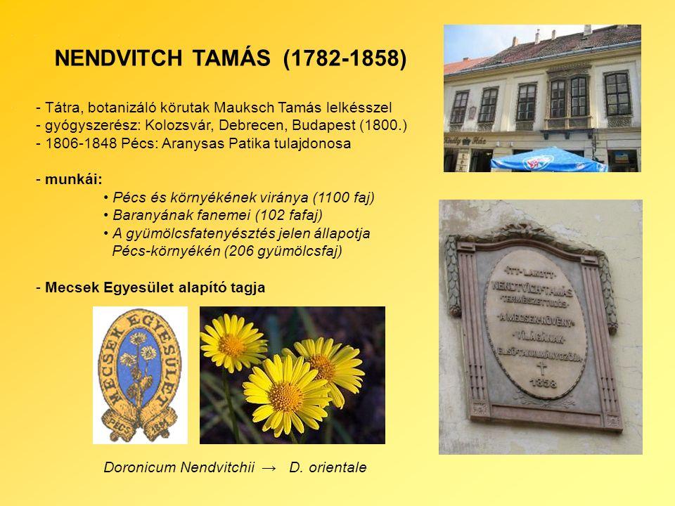 NENDVITCH TAMÁS (1782-1858) - Tátra, botanizáló körutak Mauksch Tamás lelkésszel - gyógyszerész: Kolozsvár, Debrecen, Budapest (1800.) - 1806-1848 Pécs: Aranysas Patika tulajdonosa - munkái: Pécs és környékének viránya (1100 faj) Baranyának fanemei (102 fafaj) A gyümölcsfatenyésztés jelen állapotja Pécs-környékén (206 gyümölcsfaj) - Mecsek Egyesület alapító tagja Doronicum Nendvitchii → D.