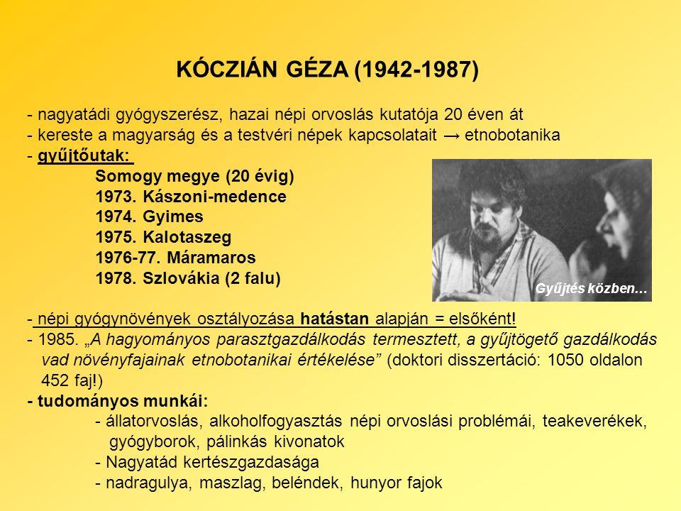 KÓCZIÁN GÉZA (1942-1987) - nagyatádi gyógyszerész, hazai népi orvoslás kutatója 20 éven át - kereste a magyarság és a testvéri népek kapcsolatait → etnobotanika - gyűjtőutak: Somogy megye (20 évig) 1973.