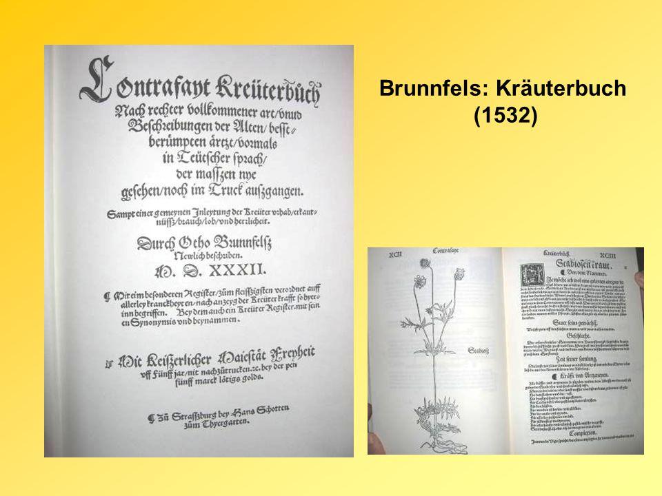 Brunnfels: Kräuterbuch (1532)