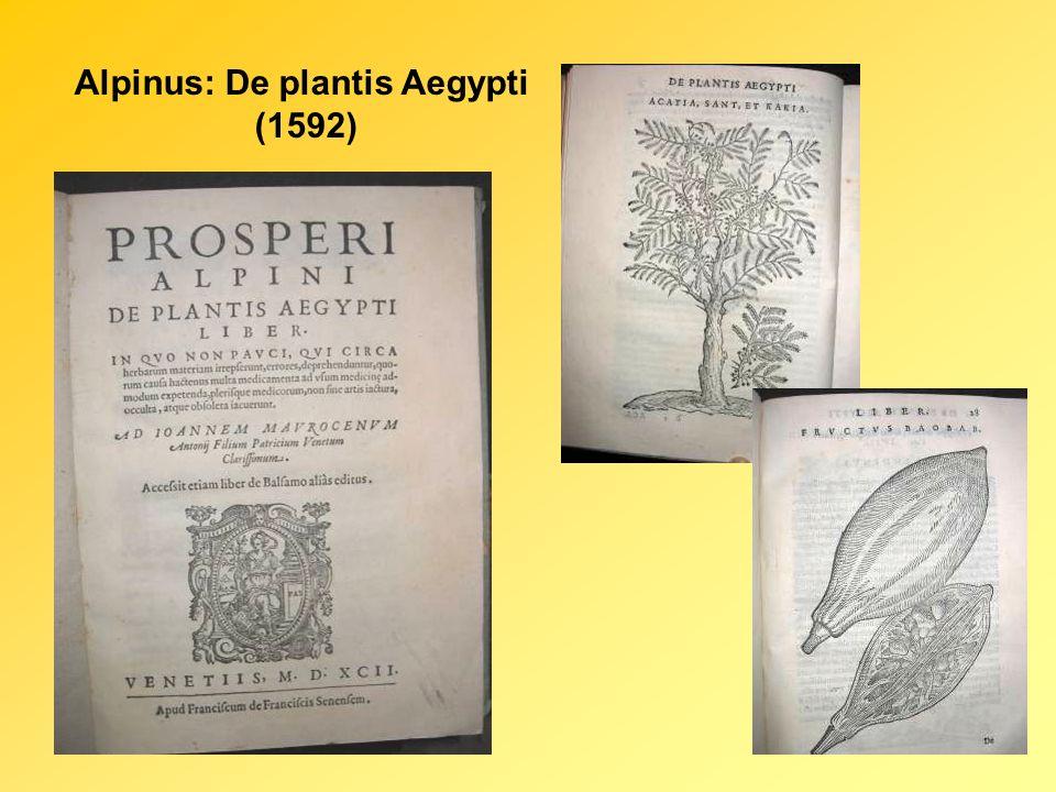 Alpinus: De plantis Aegypti (1592)
