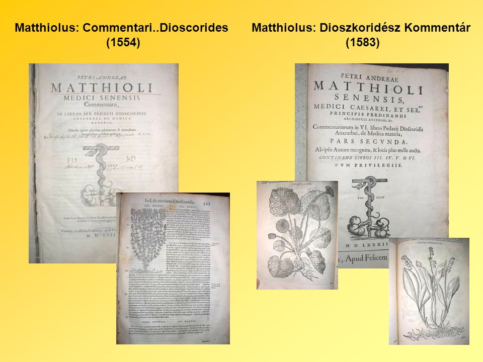 Herbario 1585Bartholomeus: Kräuterbuch (1610)