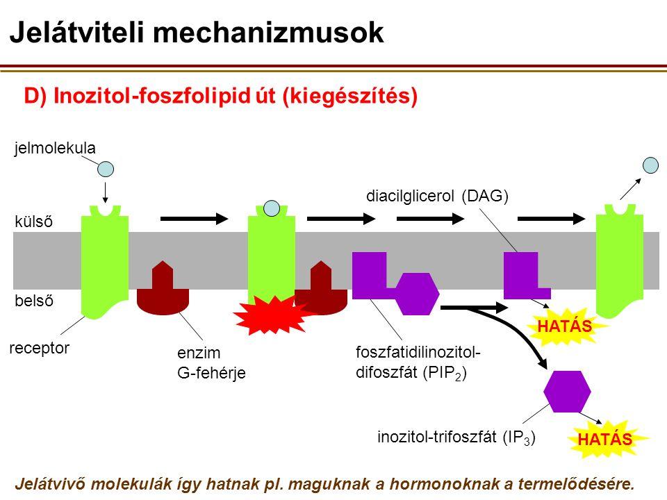 D) Inozitol-foszfolipid út (kiegészítés) külső belső receptor jelmolekula enzim G-fehérje Jelátviteli mechanizmusok foszfatidilinozitol- difoszfát (PIP 2 ) HATÁS inozitol-trifoszfát (IP 3 ) diacilglicerol (DAG) Jelátvivő molekulák így hatnak pl.