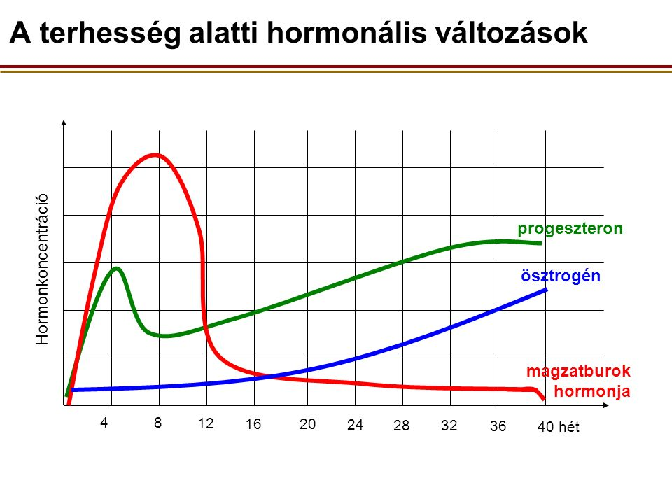 4 8 12 16 20 24 28 32 36 40 hét Hormonkoncentráció progeszteron ösztrogén magzatburok hormonja A terhesség alatti hormonális változások