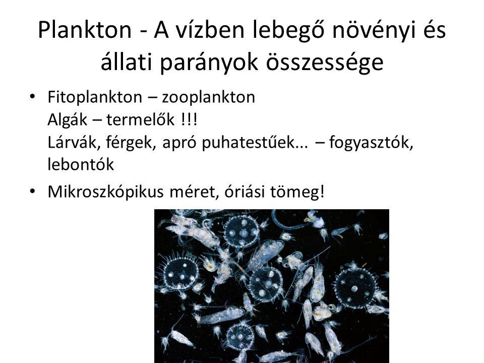 Plankton - A vízben lebegő növényi és állati parányok összessége Fitoplankton – zooplankton Algák – termelők !!.