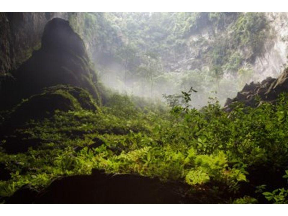 Saját dzsungele van a világ legnagyobb barlangjának ahol esőerdő és folyó is van, a dzsungelben még majmok is élnek