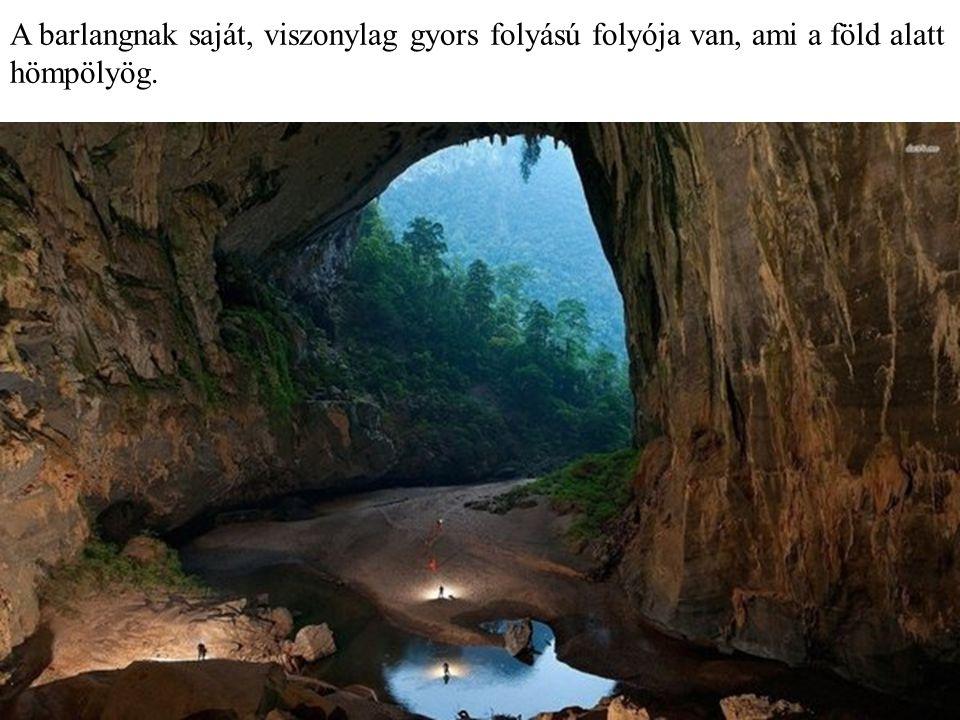 A barlangban rengeteg ősi, akár 300 millió éves fosszília is található.