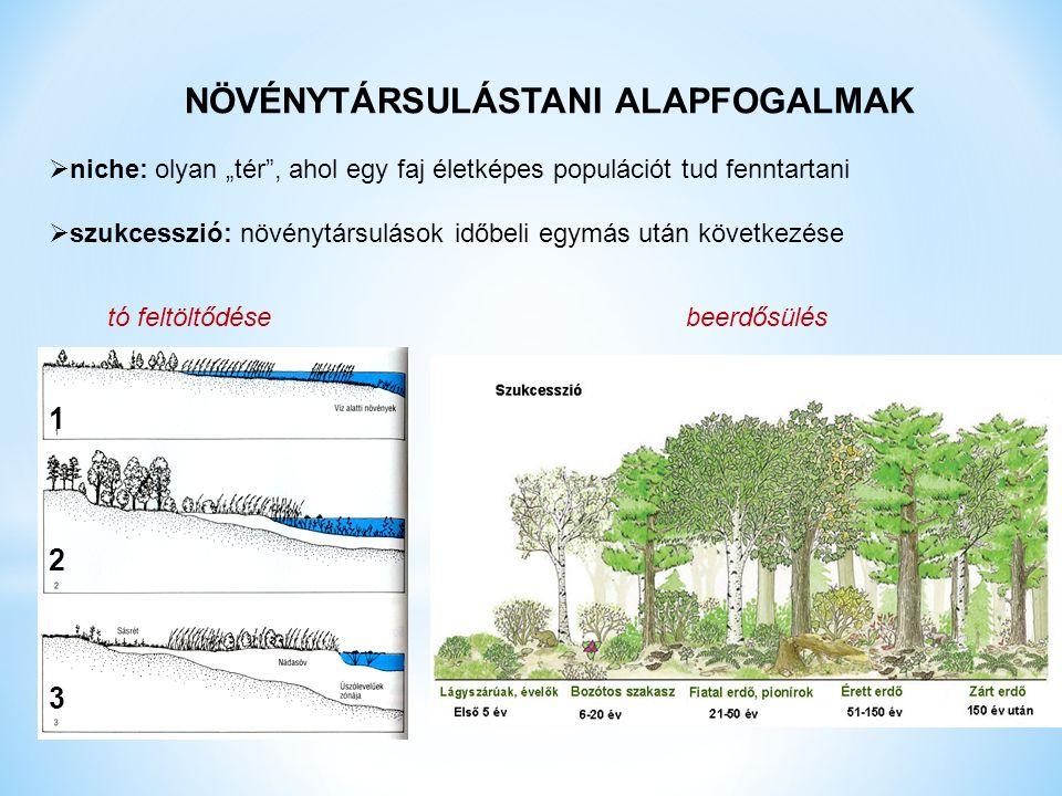 """NÖVÉNYTÁRSULÁSTANI ALAPFOGALMAK  niche: olyan """"tér , ahol egy faj életképes populációt tud fenntartani  szukcesszió: növénytársulások időbeli egymás után következése tó feltöltődése beerdősülés 123123"""