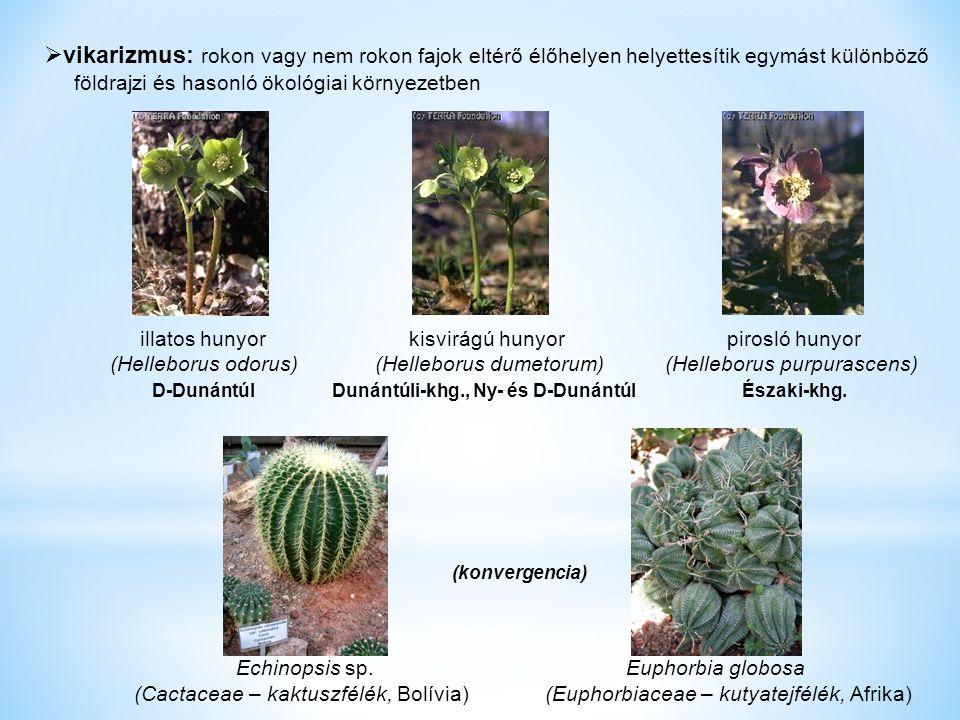  vikarizmus: rokon vagy nem rokon fajok eltérő élőhelyen helyettesítik egymást különböző földrajzi és hasonló ökológiai környezetben illatos hunyor kisvirágú hunyor pirosló hunyor (Helleborus odorus) (Helleborus dumetorum) (Helleborus purpurascens) D-DunántúlDunántúli-khg., Ny- és D-Dunántúl Északi-khg.