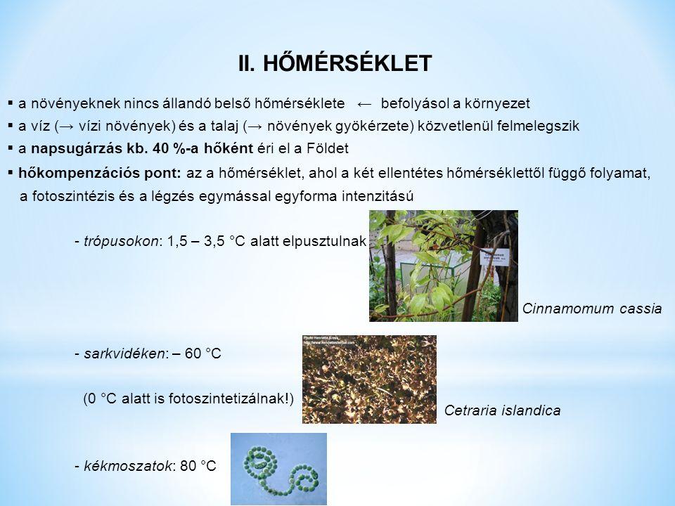 II. HŐMÉRSÉKLET  a növényeknek nincs állandó belső hőmérséklete ← befolyásol a környezet  a víz (→ vízi növények) és a talaj (→ növények gyökérzete)