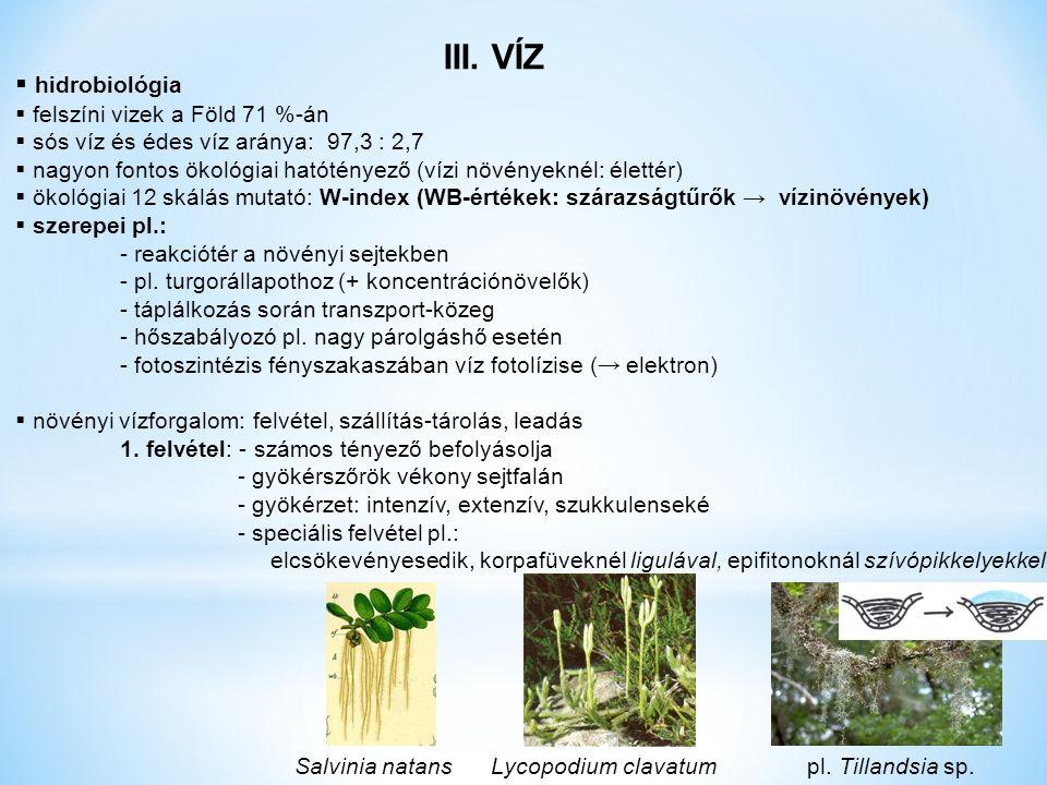 III. VÍZ  hidrobiológia  felszíni vizek a Föld 71 %-án  sós víz és édes víz aránya: 97,3 : 2,7  nagyon fontos ökológiai hatótényező (vízi növények