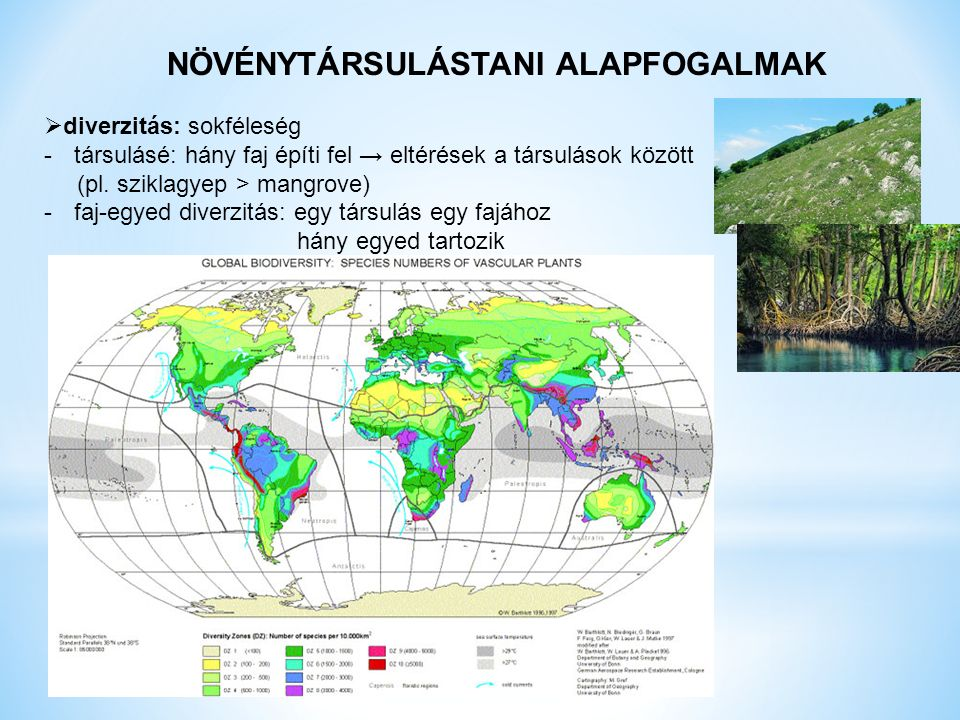 NÖVÉNYTÁRSULÁSTANI ALAPFOGALMAK  diverzitás: sokféleség -társulásé: hány faj építi fel → eltérések a társulások között (pl.