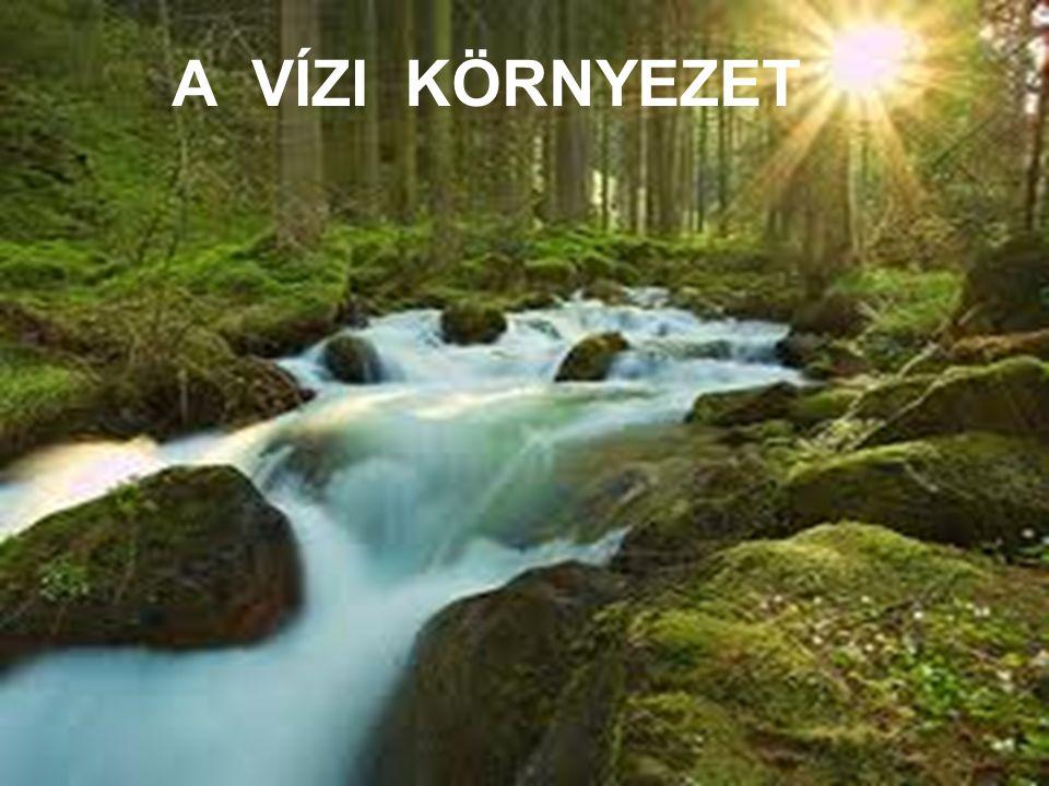 A víz körforgalma A vízkészlet állandó körforgásban van, melyet a Nap hőenergiája és a Föld nehézségi erőtere szabályoz és tart fenn.