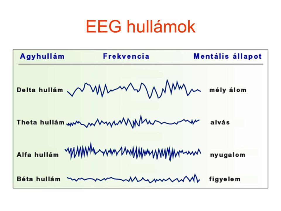EEG hullámok