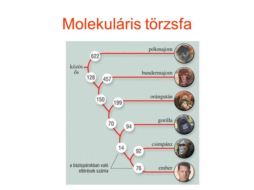 Molekuláris törzsfa