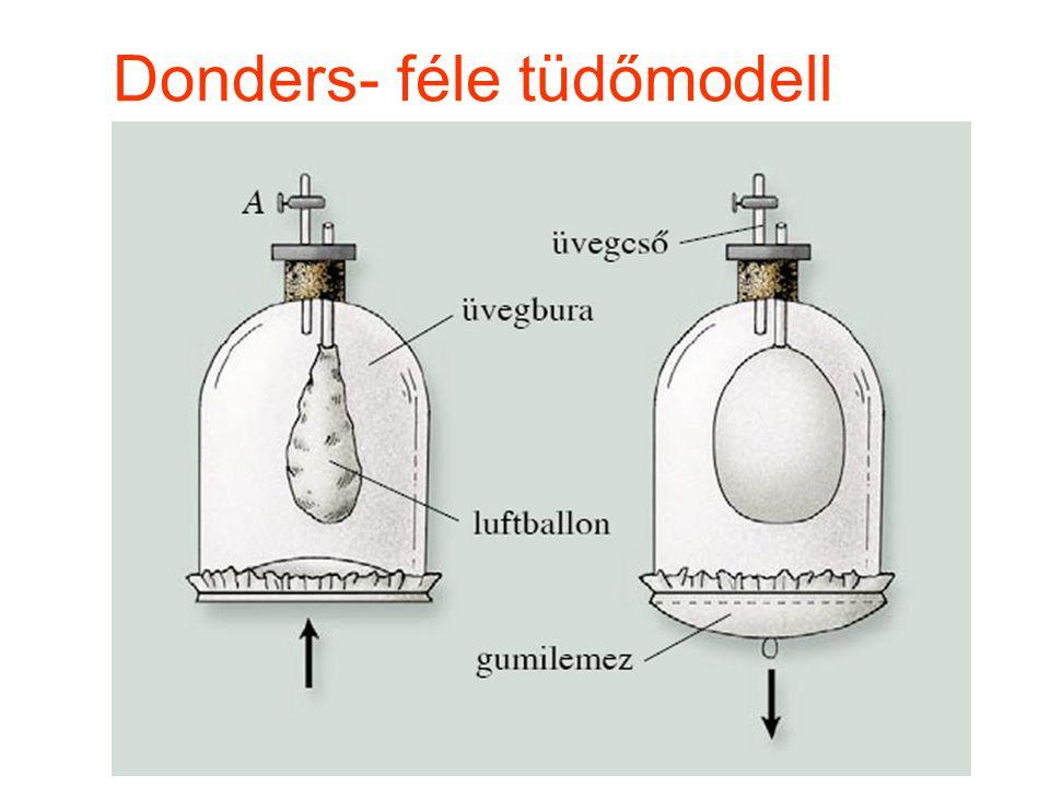 Donders- féle tüdőmodell