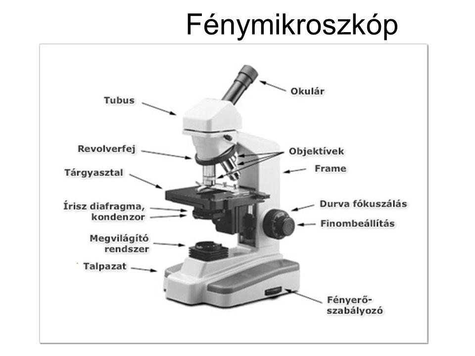 Fénymikroszkóp