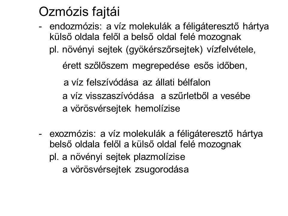 Ozmózis fajtái -endozmózis: a víz molekulák a féligáteresztő hártya külső oldala felől a belső oldal felé mozognak pl.
