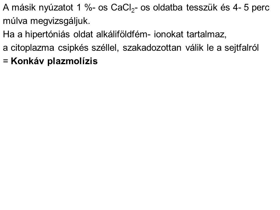 A másik nyúzatot 1 %- os CaCl 2 - os oldatba tesszük és 4- 5 perc múlva megvizsgáljuk.