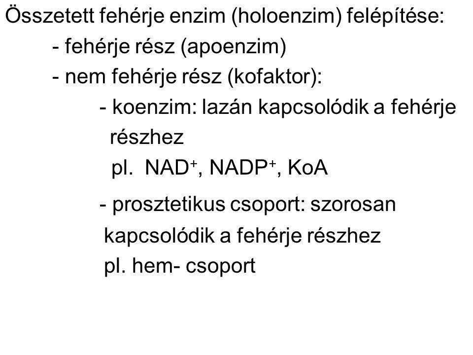 Összetett fehérje enzim (holoenzim) felépítése: - fehérje rész (apoenzim) - nem fehérje rész (kofaktor): - koenzim: lazán kapcsolódik a fehérje részhez pl.