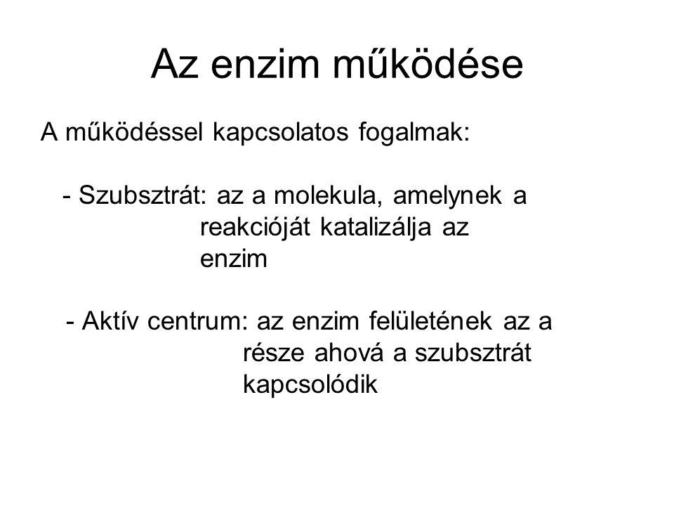 Az enzim működése A működéssel kapcsolatos fogalmak: - Szubsztrát: az a molekula, amelynek a reakcióját katalizálja az enzim - Aktív centrum: az enzim felületének az a része ahová a szubsztrát kapcsolódik