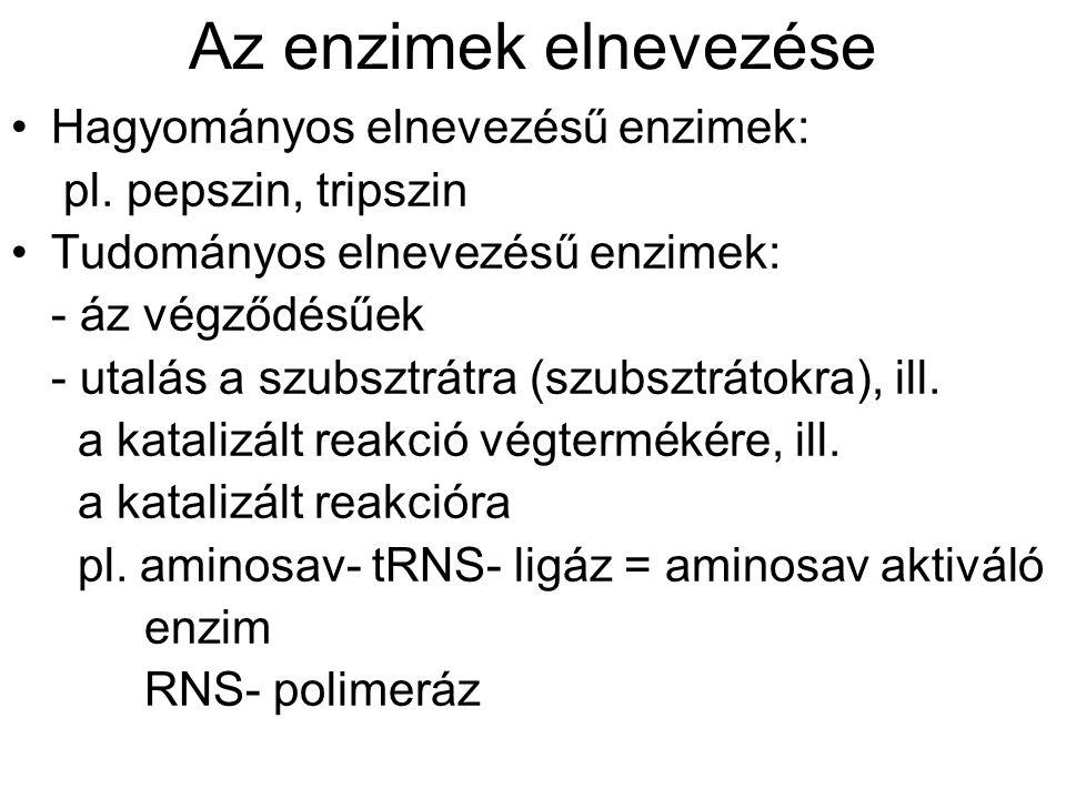 Az enzimek elnevezése Hagyományos elnevezésű enzimek: pl.