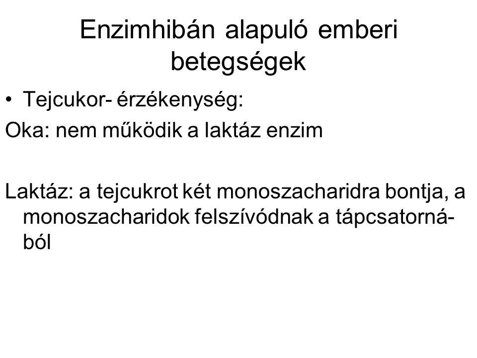 Enzimhibán alapuló emberi betegségek Tejcukor- érzékenység: Oka: nem működik a laktáz enzim Laktáz: a tejcukrot két monoszacharidra bontja, a monoszacharidok felszívódnak a tápcsatorná- ból