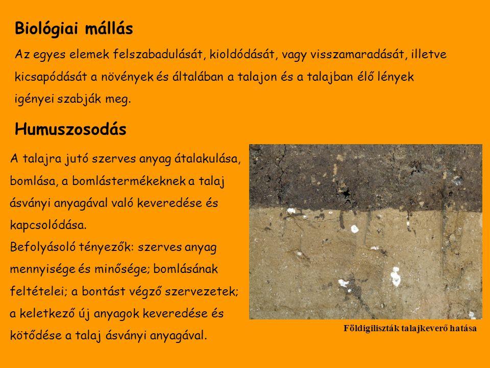Biológiai mállás Az egyes elemek felszabadulását, kioldódását, vagy visszamaradását, illetve kicsapódását a növények és általában a talajon és a talaj