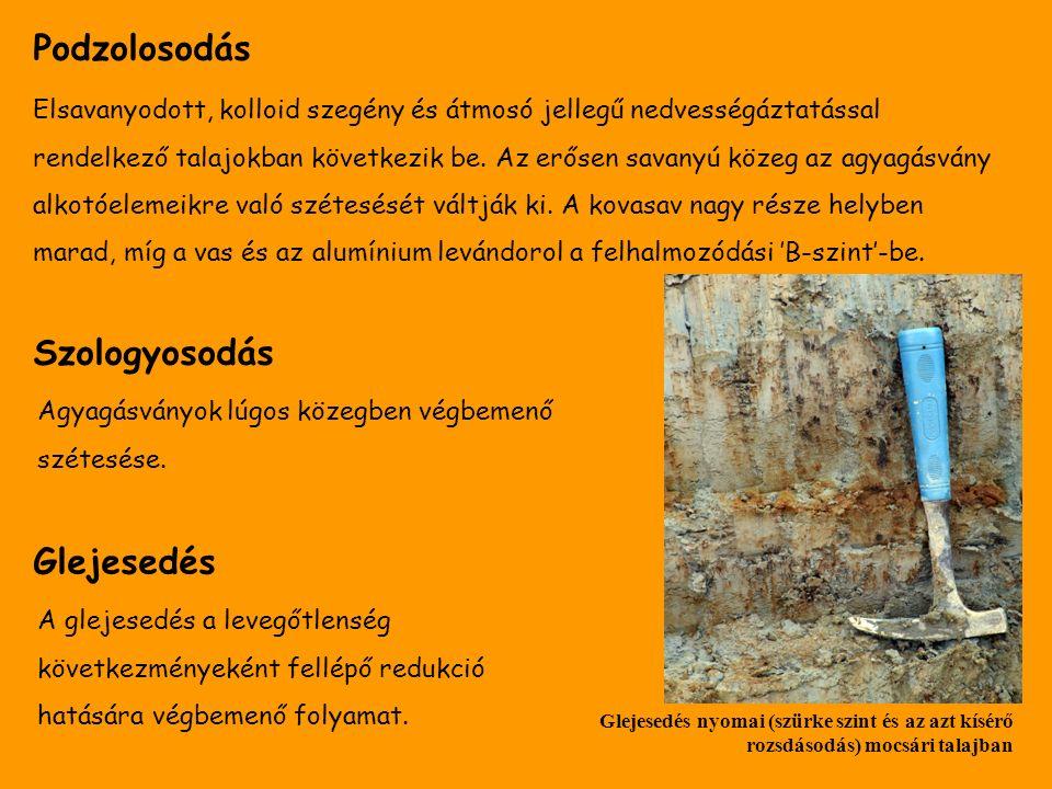 Szologyosodás Glejesedés Podzolosodás Elsavanyodott, kolloid szegény és átmosó jellegű nedvességáztatással rendelkező talajokban következik be. Az erő