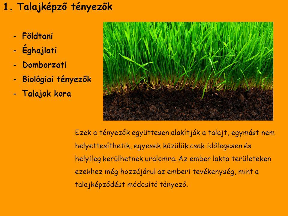 1. Talajképző tényezők -Földtani -Éghajlati -Domborzati -Biológiai tényezők -Talajok kora Ezek a tényezők együttesen alakítják a talajt, egymást nem h