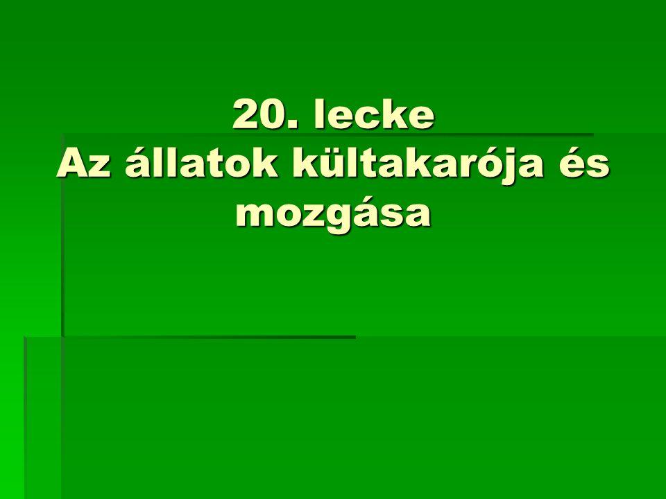 20. lecke Az állatok kültakarója és mozgása