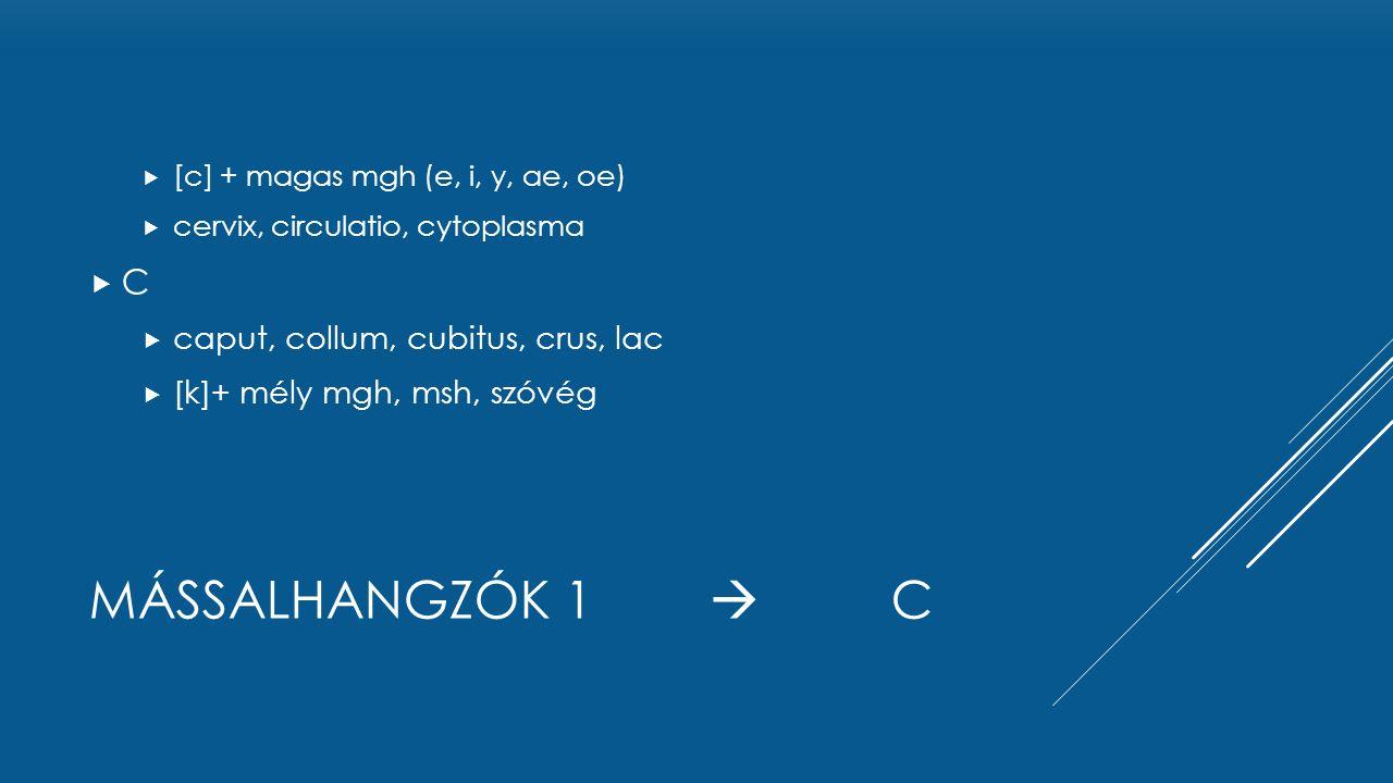 MÁSSALHANGZÓK 1  C  [c] + magas mgh (e, i, y, ae, oe)  cervix, circulatio, cytoplasma CC  caput, collum, cubitus, crus, lac  [k]+ mély mgh, msh, szóvég