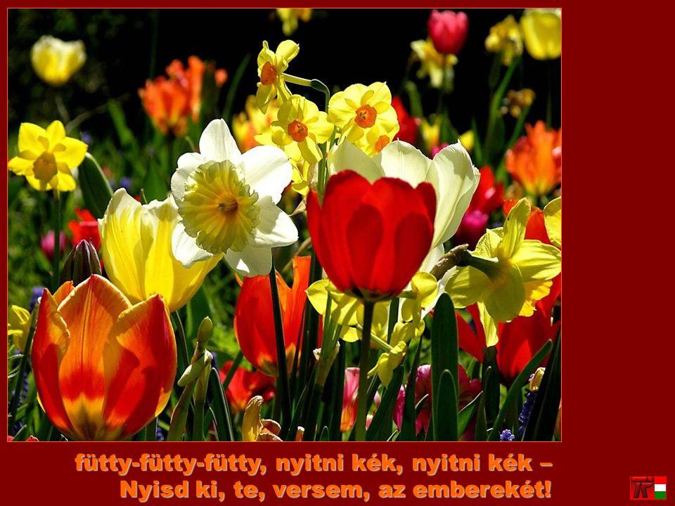 a hitet, a vágyat fütyülte szét, kinyitotta a föld örök szivét: